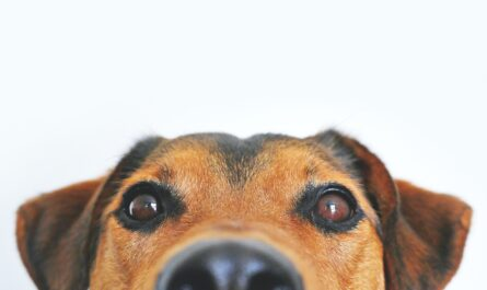 Photo by Lum3n from Pexels (My Science Articles.com) Featured Image of why dogs can't eat Chocolate?
